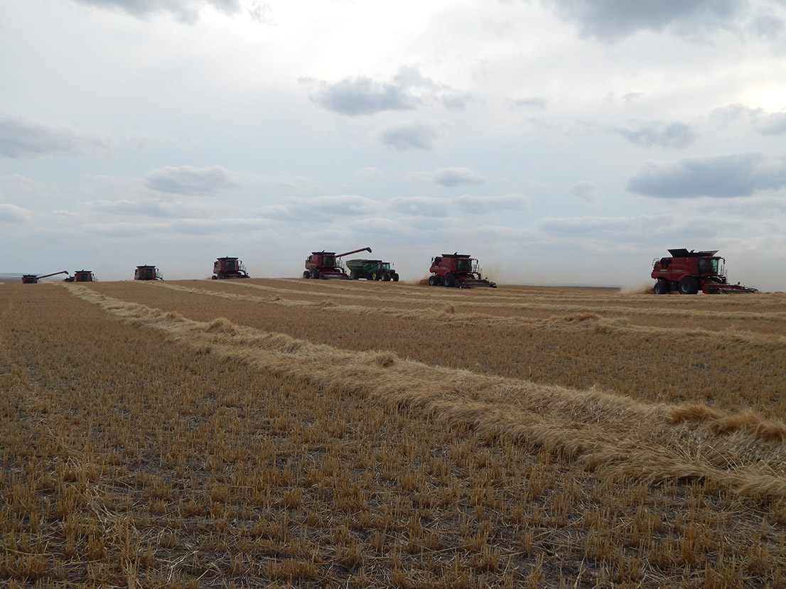 Thacker Harvesting